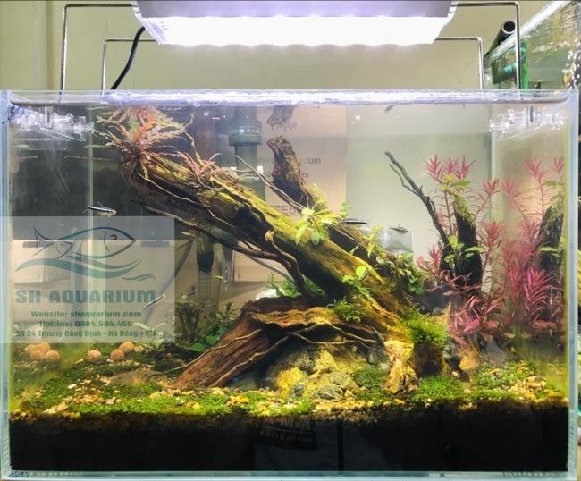 Sh Aquarium