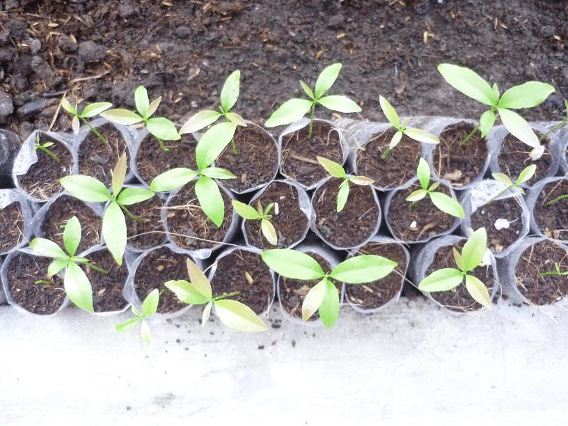 Cây trồng Đồng Nai 4