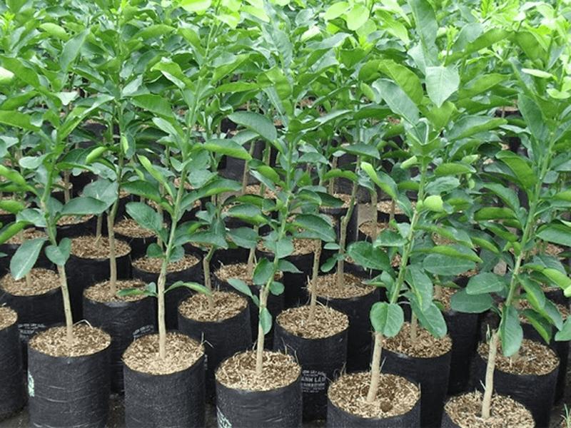 Cây trồng Đồng Nai 5