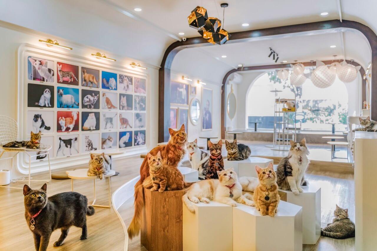 quán cafe thú cưng ở Sài Gòn 1