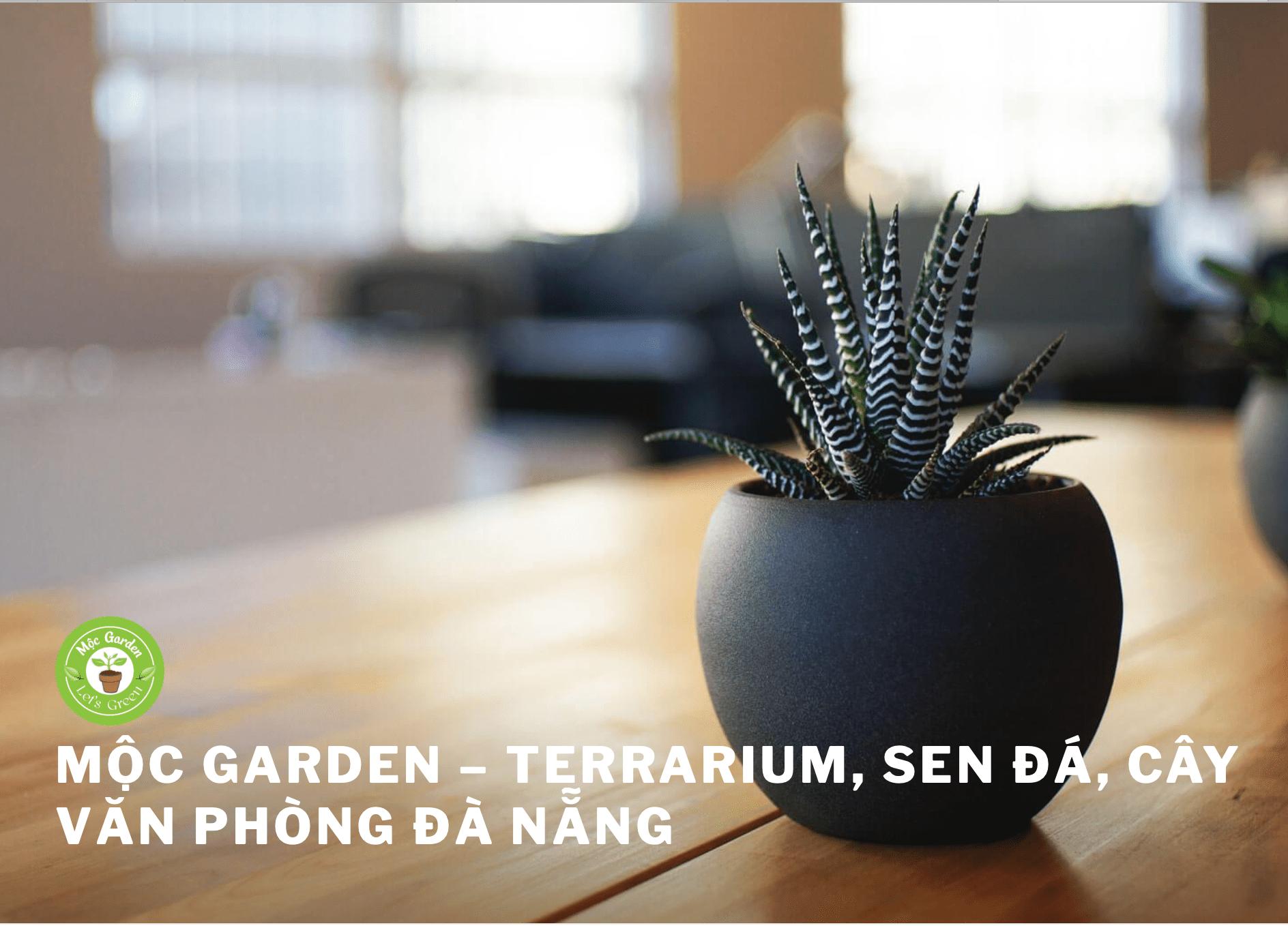 cây cảnh Đà Nẵng